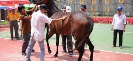 Đại Nam sắp có trường đua ngựa lớn nhất Việt Nam